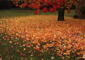 St. Louis Leaf Removal